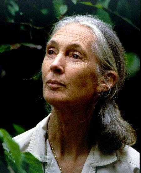 Janes Goodall-123