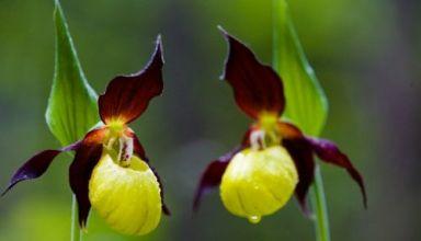 hoa hoangffg