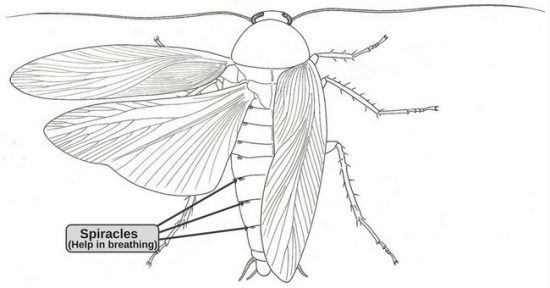 gian-ong